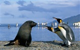 Windows 8 Wallpaper: Antarktis, Schnee Landschaft der Antarktis Pinguine #14