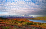 Denali National Park HD landscape wallpapers