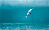 Sea bird seagull HD wallpapers #5