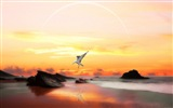 Sea bird seagull HD wallpapers #8