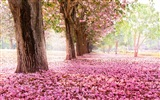 Flowers fall on ground, beautiful HD wallpapers
