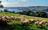 Tierwelt, Windows 8 Panorama-Widescreen-Wallpaper