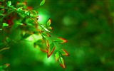 Plant leaves with dew HD wallpapers #11
