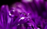 Blumen mit Tau close-up, Windows 8 HD Wallpaper