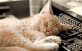Calendar 2015 HD wallpapers #19