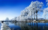 Winter snow beautiful scenery HD wallpapers