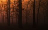 Windows 8 theme forest scenery HD wallpapers #2
