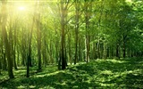 Windows 8 theme forest scenery HD wallpapers #3