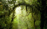 Windows 8 theme forest scenery HD wallpapers #5