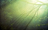 Windows 8 Thema Waldlandschaft HD Wallpaper #6