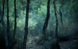 Windows 8 theme forest scenery HD wallpapers #7