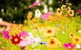 Fresh flowers and plants spring theme wallpapers #6