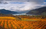 October 2016 Bing theme HD wallpapers (1)